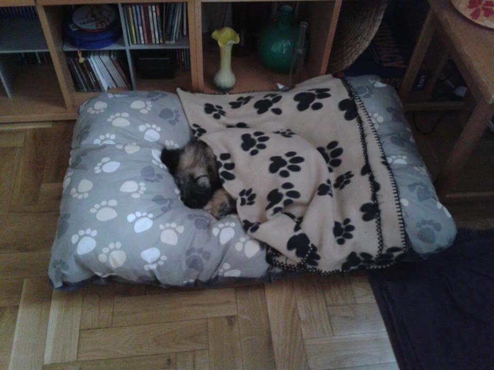 Hund mit Magen-Darm-Problemen