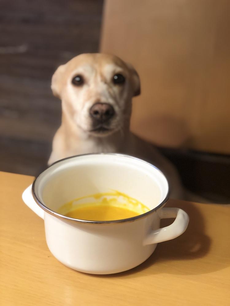 Hund vor Kürbissuppe