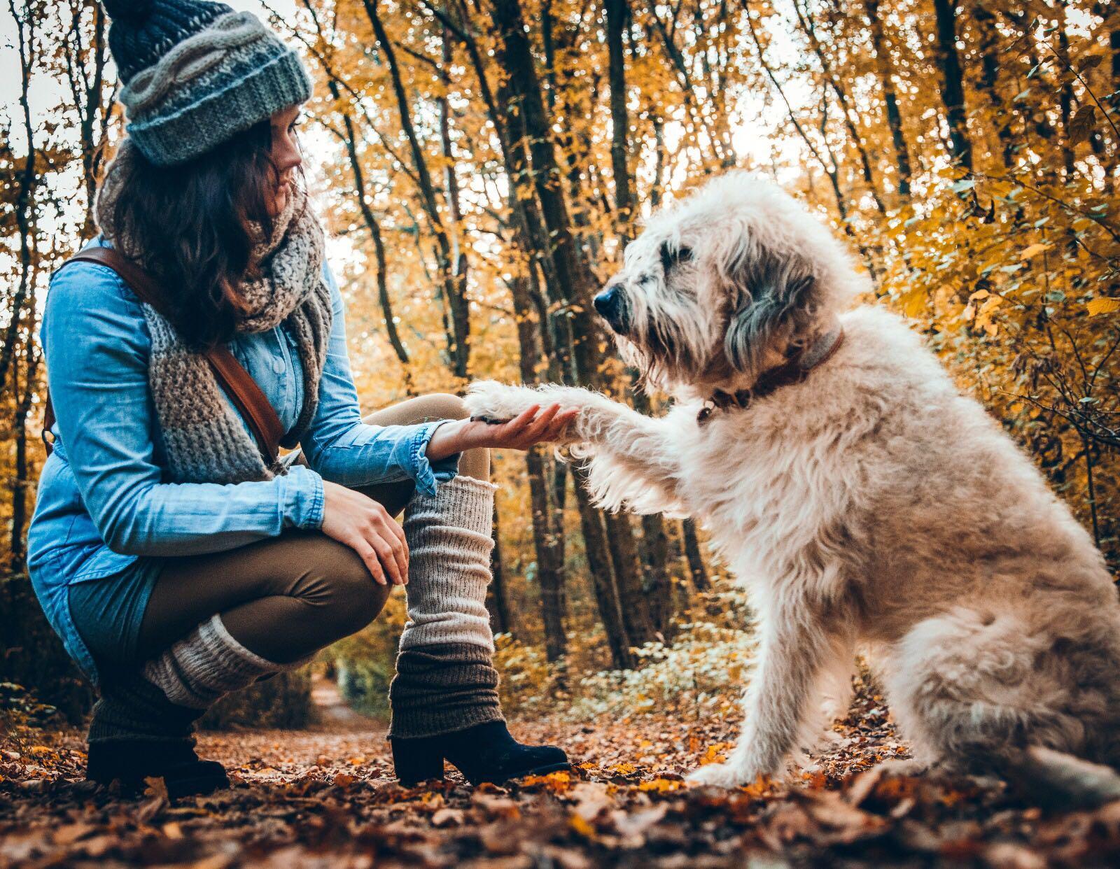 Balou mit Vitalpilzen fuer Hunde