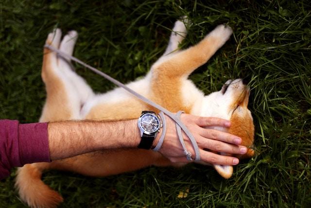 Massage für den Hund
