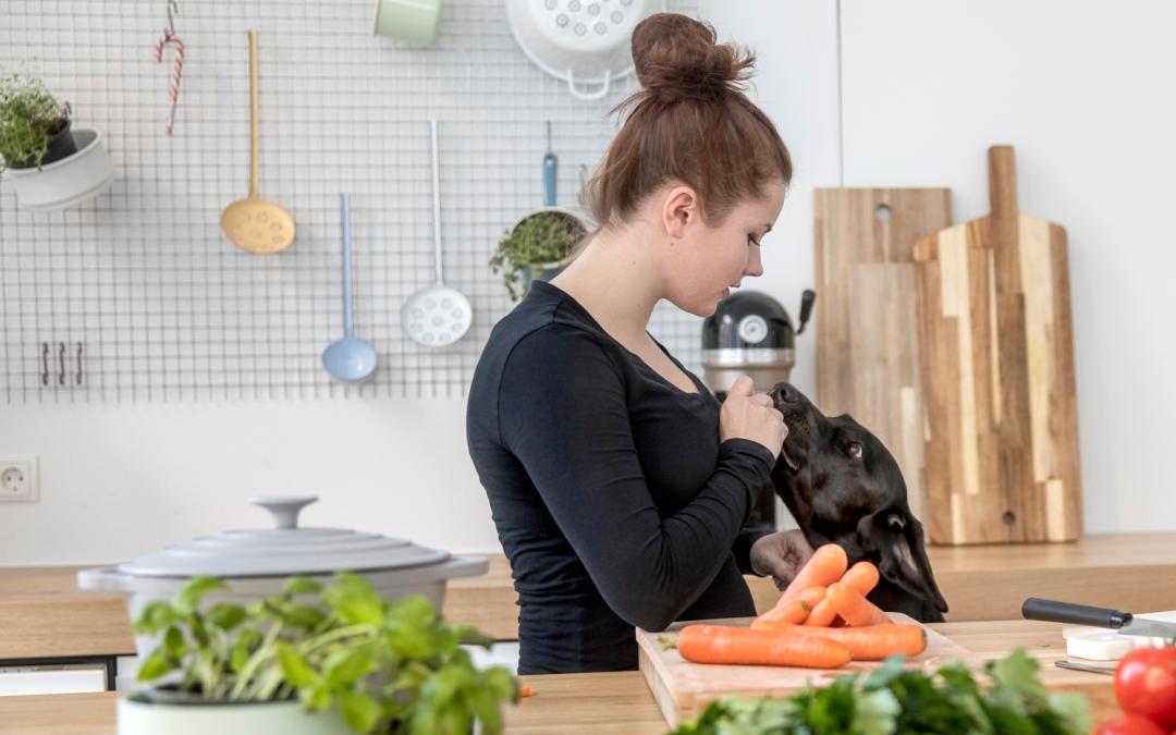 Berufsbild Hundeernährungsberater