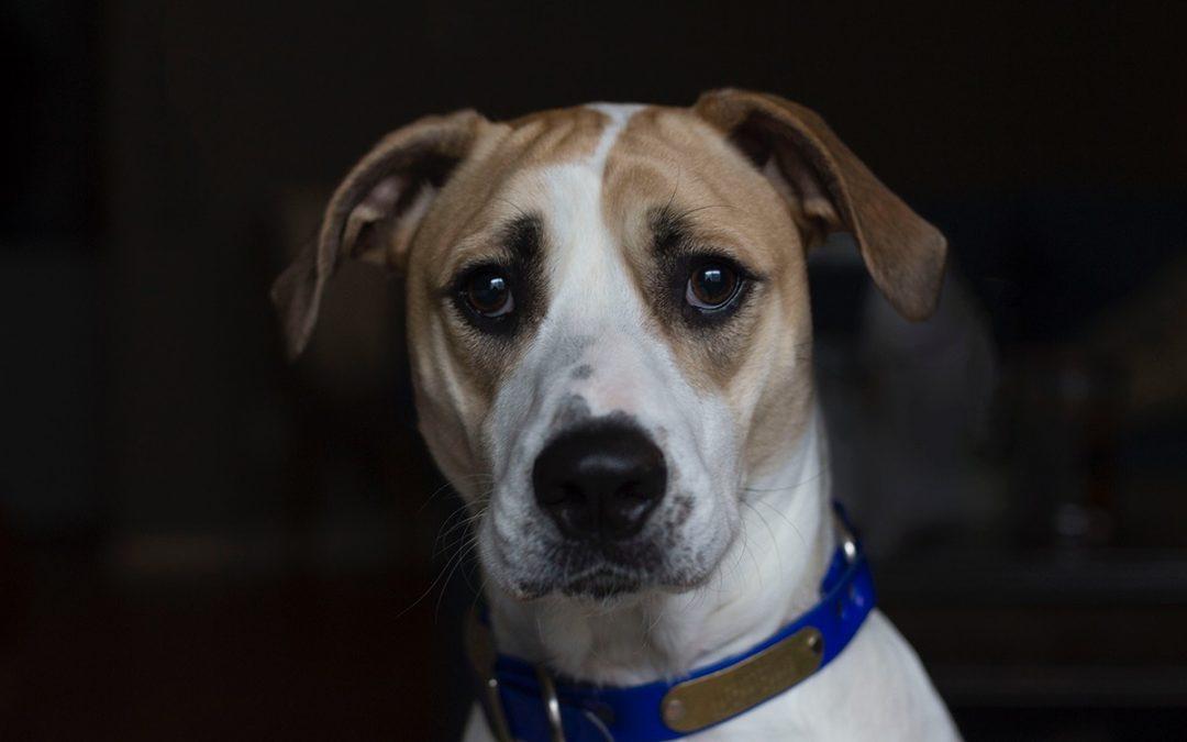 Mein Hund hat Krebs – was nun?