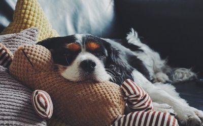 Verstopfung bei Hunden