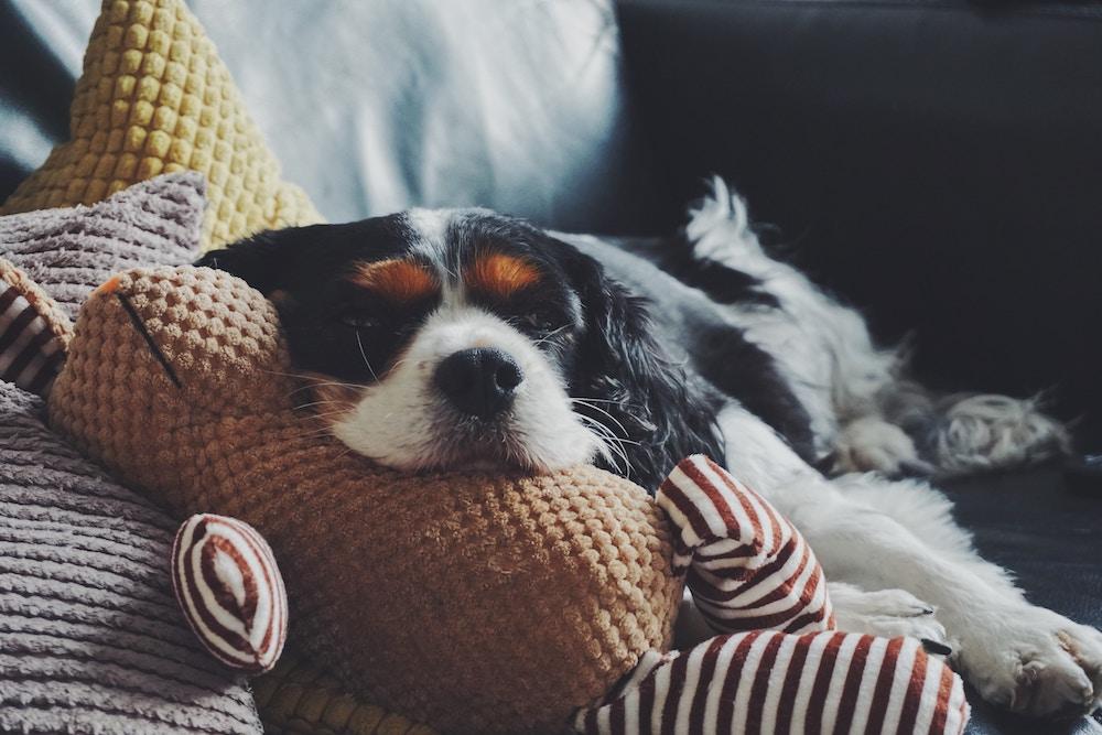 Hund mit Verstopfung