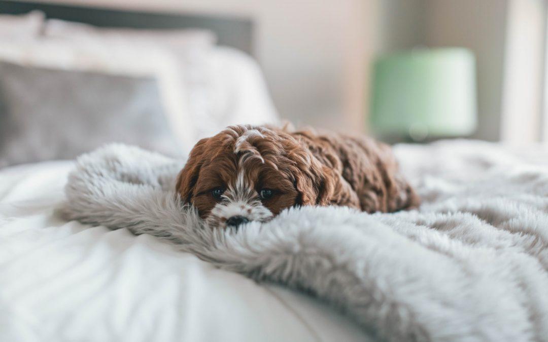 Erkältung beim Hund