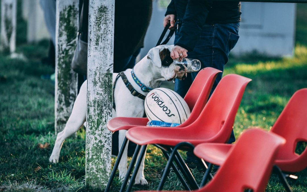 Berufsbild Hundetrainer
