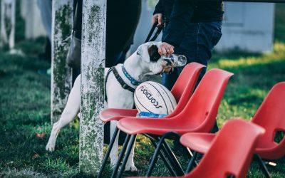 Berufsbild HundetrainerIn