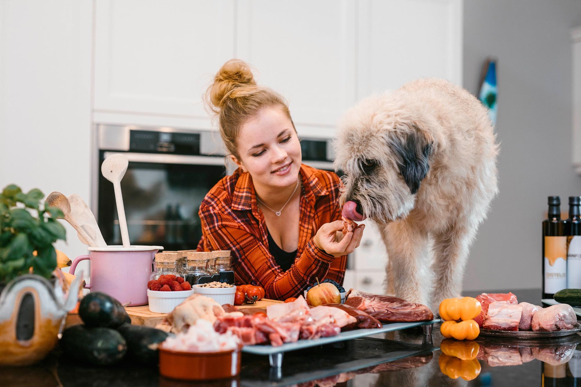 Mach deine Leidenschaft zum Beruf und werde Hundeernaehrungsberater