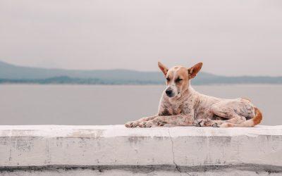 Arthrose beim Hund erkennen und behandeln