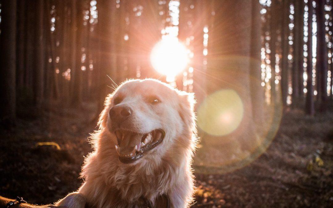 Wurmkur für den Hund: Das musst du wissen
