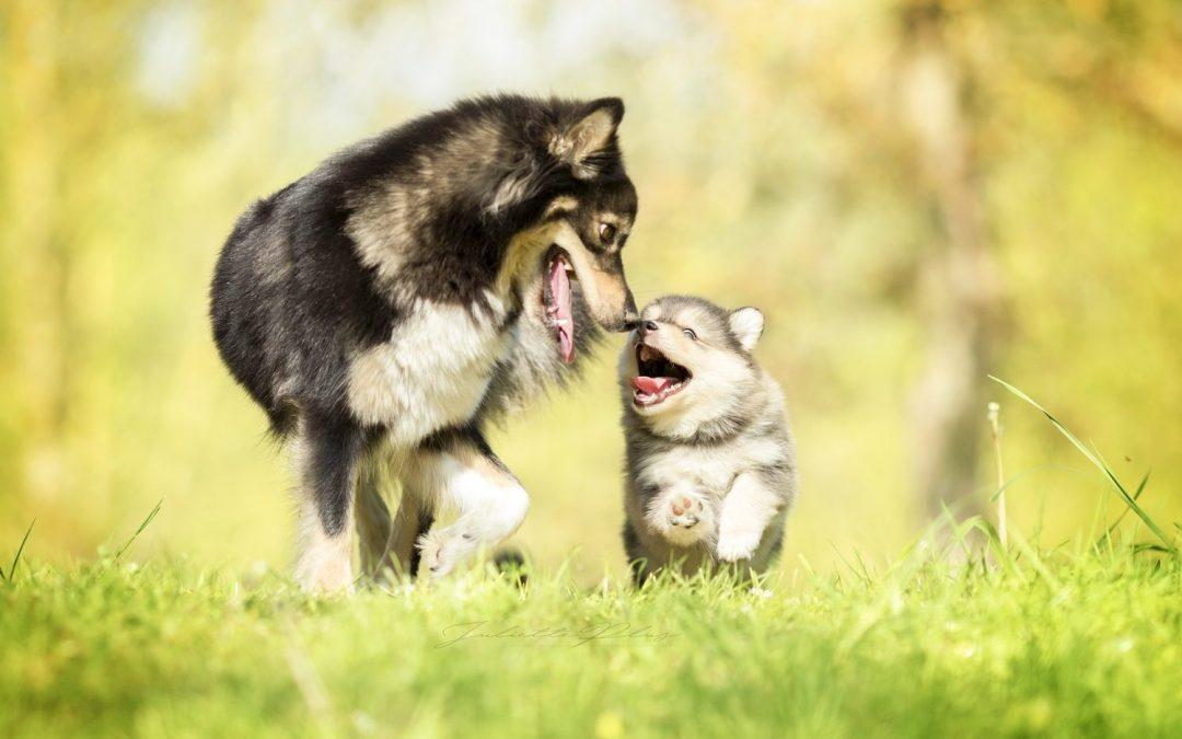 Heilkräuter für Welpen und Hunde im Wachstum