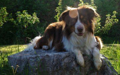So lassen Zecken zukünftig deinen Hund in Ruhe!