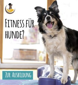 Hundefitnesstrainer-Ausbildung