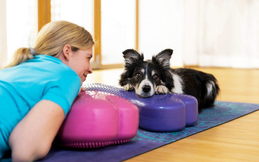 5 Tipps, um Verletzungen beim Hundesport vorzubeugen