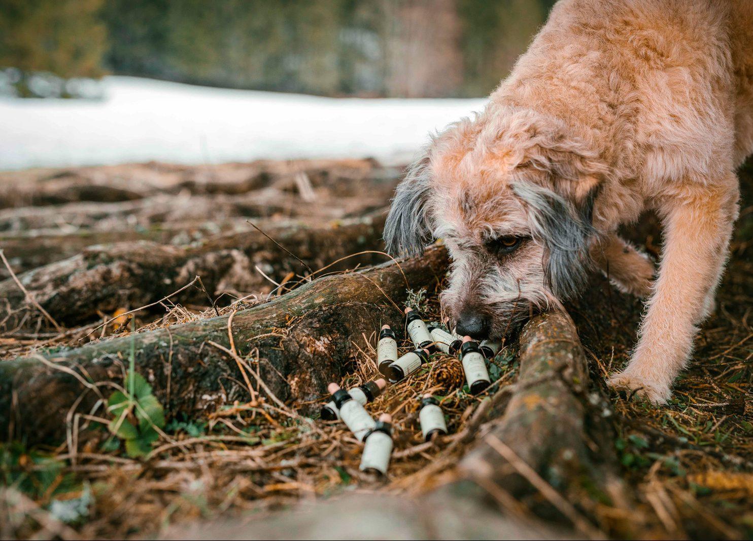 Bachblüten Hund