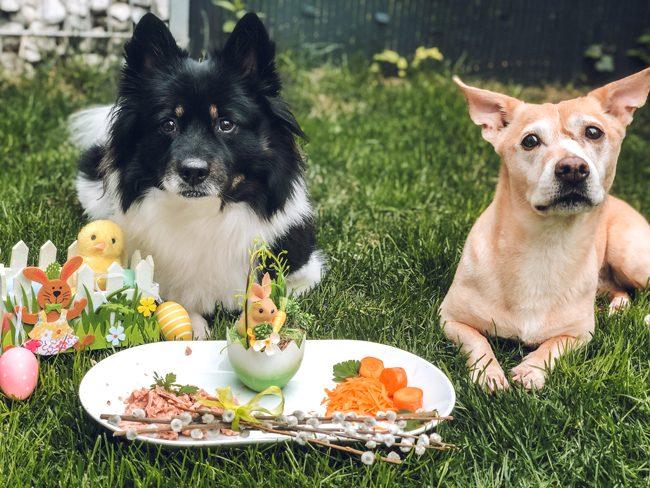 Hunde zu Ostern