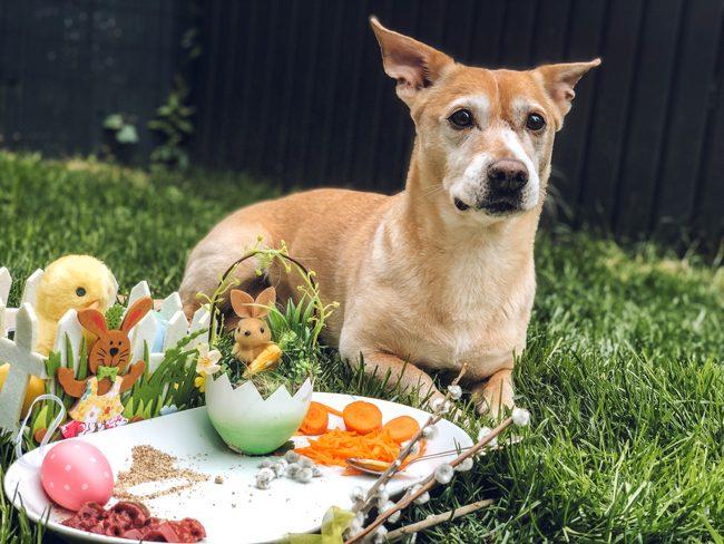 Leckeres für Hunde