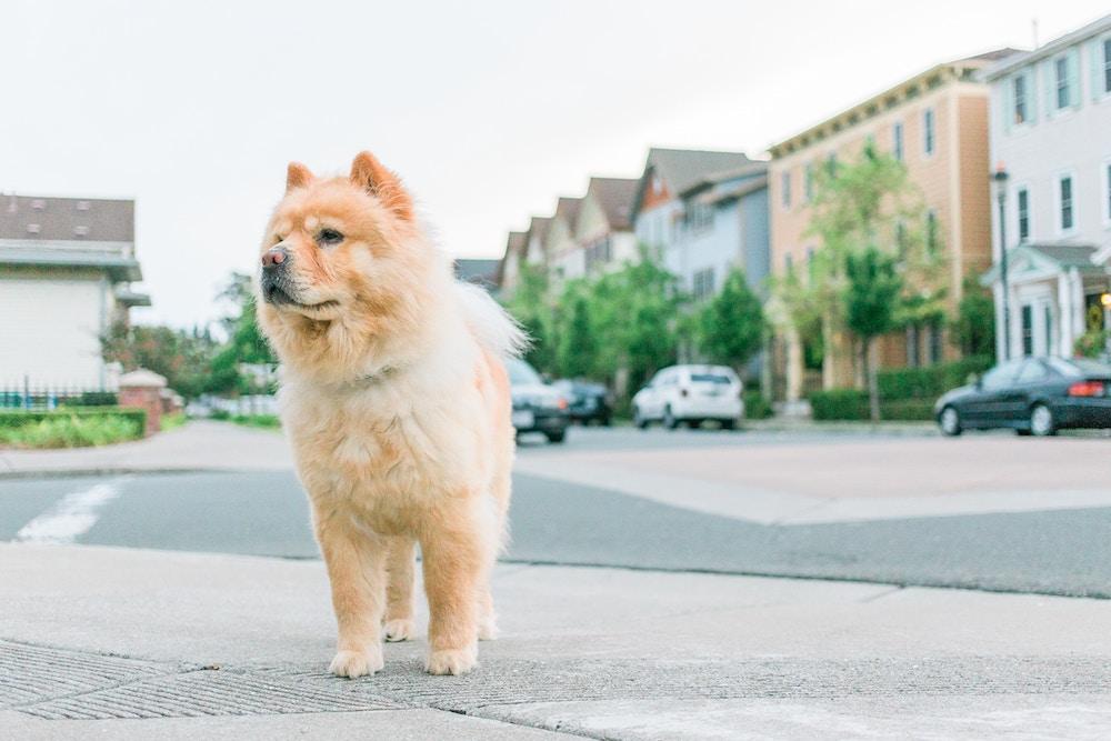 Hundeernährungsberater: Ausbildung, Gehalt und Aufgaben