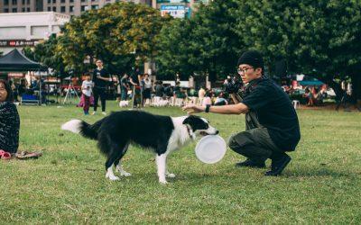 Berufsbild Hundephysiotherapeut