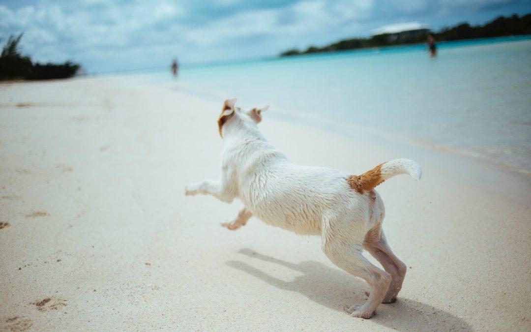 Kreuzbandriss beim Hund: Symptome, Behandlung, Diagnose