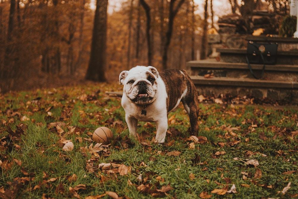 Blähungen beim Hund bekämpfen
