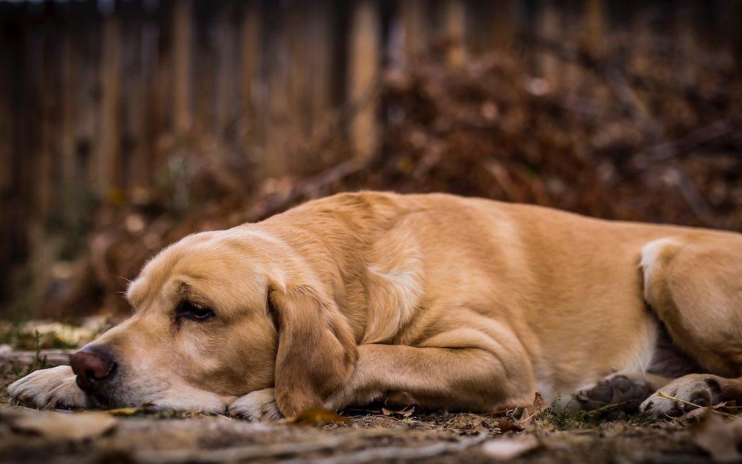Die häufigsten Darmkrankheiten bei Hunden