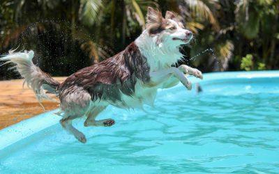 Die beliebtesten Hundesportarten im Überblick