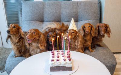 Die beliebtesten Hundefutter im Test