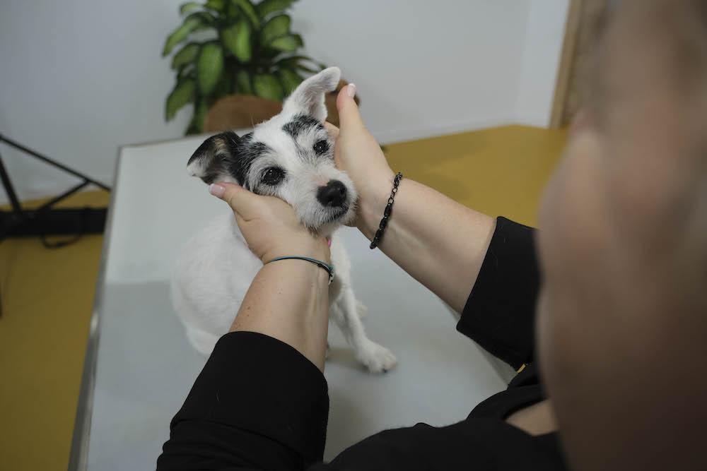 Ohren langziehen Massage Hund