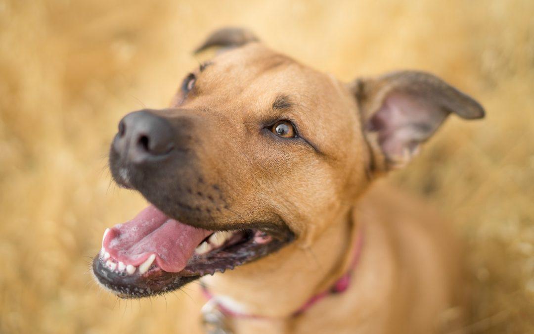 Was du über kaltgepresstes Hundefutter wissen musst