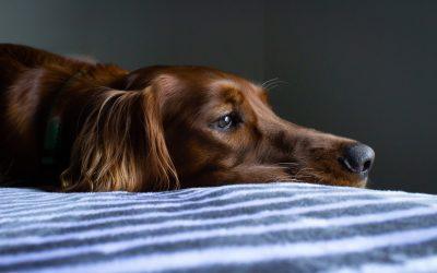 Magen-Darm-Probleme beim Hund