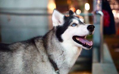 Epilepsie beim Hund