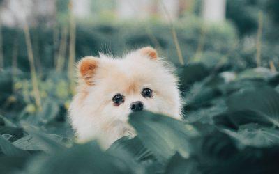 Hunde stubenrein kriegen
