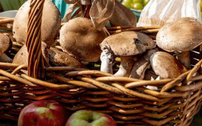 Pilze in der Futtermittelproduktion