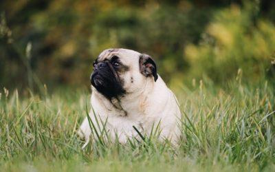 So gelingt eine erfolgreiche Diät für Hunde