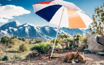 Sonnenbrand beim Hund: Das kannst du tun