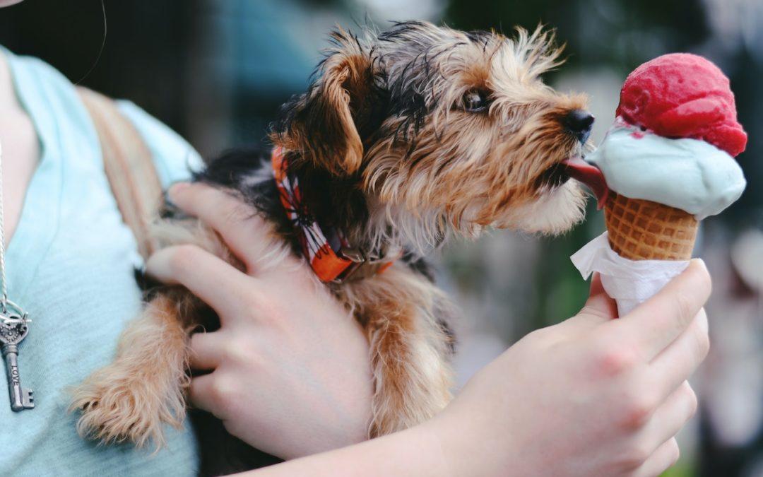 Kühlende Hundesnacks für den Sommer