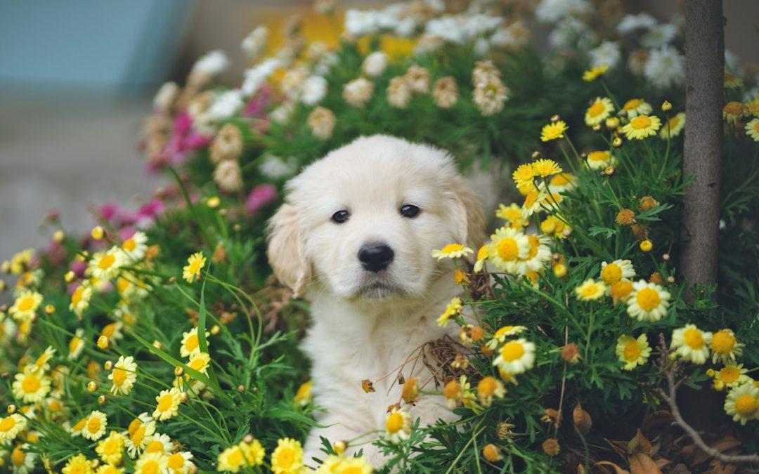 Natürliche Schmerzmittel für Hunde