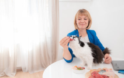 5 fundamentale Ernährungsunterschiede zwischen Hunden und Katzen