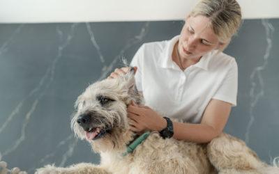 Berufsbild Gesundheitscoach für Hunde