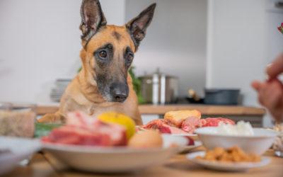 Wie sich die Hundeernährung aufs Verhalten auswirkt